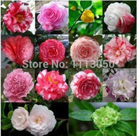 semillas azules negras al por mayor-Envío gratis 10pcs Peony Seed 8 Color Black Red Yellow Pink Green Blue Purple White, color de la mezcla Peony Flower seeds.