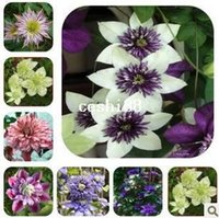 Wholesale Plants Seeds Bulbs - free shipping Bonsai clematis bulbs wire lotus plant seeds - 200 pcs seeds