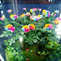 Wholesale Cheap Wholesale Blue Rose Flowers - Garden Supplies 7 Color Rose Flower Seeds Cheap Free Shipping Pink Red Yellow Black Purple Royal Blue 50 Pieces Seeds Per Package