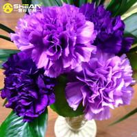 ingrosso piante del cortile-A Pack 200 Pz Viola Garofano Semi Balcone In vaso Cortile Giardino Piante Semi Dianthus Caryophyllus Seme di fiori