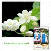 ingrosso bonsai di gelsomino-Semi di gelsomino Piante di bonsai da interno Semi di fiore perenne Bella sementi di fiori di gelsomino bianco puro 25 PCS / Pro Pack