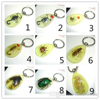 Wholesale Amber Insect Ring - Cute Key Ring New key Ring Cute Key Ring New Womens Transparent key Ring and Insect Amber Fashion Womens Metal Key Ring