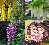 Wholesale Chinese Garden Flowers - Home Garden Chinese Wisteria Seeds Mix 4 Colors 160pcs Rare Flower Seeds Purplevine Creepers Seeds Sementes De Flores