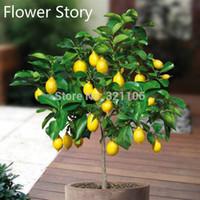 kapalı bonsai toptan satış-20 Cüce Limon Ağacı Tohumları --- Doğal Parfüm Kapalı, DIY Ev Bahçe Bonsai, kokulu
