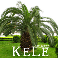 Big Promotion!Cycas Plant Seeds Potted Flower Seed for DIY Home Garden Household Items 10 PCS Lot Cycas Seeds,#5NFV4Q