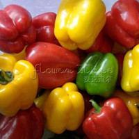Wholesale Bell Peppers Seeds - 20 Organic Rainbow Bell Pepper Seeds DIY Home Herb Free Shipping TT285