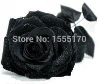 rosensamen china großhandel-Kostenloser Versand 50 Samen China Rare Black Rose Flower
