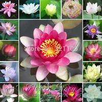 nelumbo samen großhandel-Freies verschiffen Bonsai nelumbo nucifera mini mischfarbe lotus samen kleine seerose samen hydroponischen bonsai schüssel lotus samen