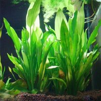 Wholesale Underwater Plants - 14cm Underwater Artificial Aquatic Plant Ornaments Aquarium Fish Tank Green Water Grass Landscape Decoration akvaryum dekor