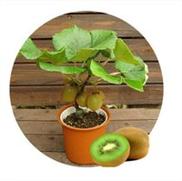 Wholesale Thailand Free Shipping Wholesale - 100pc lot Free shipping, Thailand Mini Kiwi seeds Fruit Bonsai Plants, Delicious Kiwi Small Fruit Trees Seed
