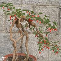 ingrosso piante da giardino casa-Goji Berry Chinese Wolfberry Seed Semi di ortaggi Erbe Sementi Piante in vaso giardino domestico casa piante da esterno 200 pz