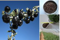 Berry Seeds Australia New Featured Berry Seeds At Best Prices