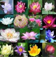 lotus tohumları bedava toptan satış-Ücretsiz Kargo 40 Parça / Lotus Çiçeği / Lotus Tohumları / Su Bahçe Bitkileri / Size Lotus Çiçek Bitki ÖĞRENMEK