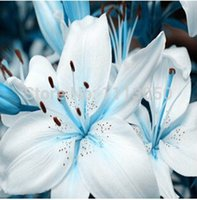 Wholesale Cheap Perfume Wholesalers - Free shipping 100 different varieties of cheap perfume lily seeds flower seeds