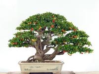 ingrosso semi di albero coperti-Piante da appartamento di lusso, hanno bisogno di frutta in vaso, Taiwan Mini semi di ciliegio perlato 30 semi di semi di albero bonsai