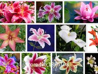 Wholesale Cheap Wholesale Bonsai - home & garden 100burpee perfume Lily Seeds flower Germination Cheap Flower seed creepers bonsai garden supplies pots planters ho