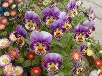 Wholesale Viola Tricolor Flower - Free Shipping 100 Seeds Viola tricolor seedsFlower seeds balcony small butterfly cat face flower seed For Home Garden