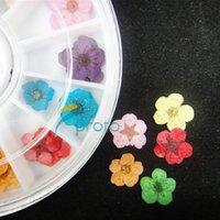 Wholesale Dry Flower For Nail Decoration - 10PCS LOT 12 colors dried flowers for nail art decoration dry flowers in wheel wholesales SKU:D0018XXXX