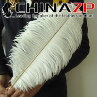 Wholesale Large Ostrich Feathers Wholesale - Leading Supplier CHINAZP Crafts Factory Large Size from 18 to 20inch (45~50cm) Beautiful Natural Bleached White Ostrich Feathers