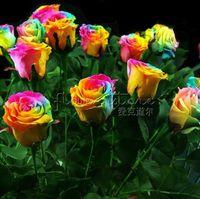 Wholesale Rose Bushes - 20 Rains Rainbow Rose Seeds Bush Flower Seeds~beautiful gardens!!Free Shipping TT373