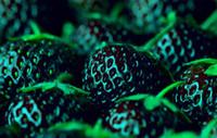 ingrosso semi di frutta biologica-1 borsa = 300 PZ VENDITA CALDA Nero Semi di Fragola Bonsai Semi di Frutta Rari arrampicata PIANTA ORGANICO Casa Giardino Esotico spedizione gratuita
