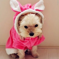 Wholesale Halloween Bunny Costume - Rabbit BUNNY Fleece Dog Costumes Coats XS  S  M  L  XL Pink  Red for Dogs Halloween Costume