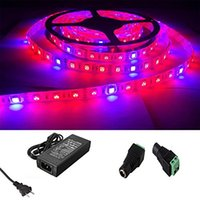 Wholesale Power Plant Hydroponic - 16.4ft 5m Red Blue 4:1 Waterproof 5050 Growing Led Strip Lights Aquarium Greenhouse Hydroponic Plant Growing Light + 5A Power Adapter