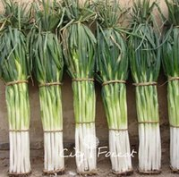 Wholesale Onions Seeds - Giant Chinese Onion Vegetable 200 Seeds   Bag Popular Cooking Onions Variety Easy to Grow from Seeds Heirloom Vegetable Seed