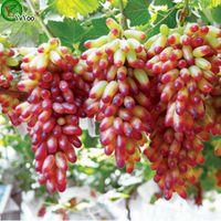 ingrosso uva seme-Semi d'uva Albero da frutto biologico Semi Giardino domestico Pianta da frutto, può essere mangiato! 50 pezzi R014