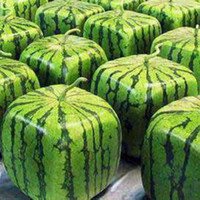 Wholesale Melons Seeds - A Package 20 Pieces Seeds Rare Simple Geometric Square Watermelons Seeds Delicious Chinese Fruit Water Melon Seeds