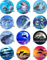 Wholesale Blue Dolphin Music - Free shipping dolphin glass Snap button Jewelry Charm Popper for Snap Jewelry good quality 12pcs   lot Gl350 jewelry making DIY