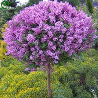 ingrosso bonsai trees-Semi di lillà Semi di albero di bonsai cinesi Questo è 100% di semi veri 50 pezzi R019