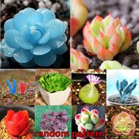 Wholesale 120Pcs Mixed Succulent Seeds Lithops Rare Living Stones Plants Cactus Home Plant