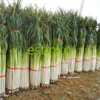 semillas de vegetales bonsai al por mayor-Shangdong Zhangqiu Gigante Chino Semillas de Cebolla Verde Semillas de Vegetales Home Garden Bonsai Planta de Semillas de Vegetales Chinos Envío Gratis