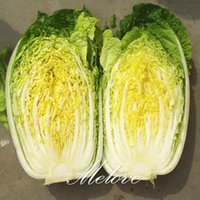 Wholesale Winter Seeds - Chinse Cabbage Yellow Heart Vegetable 500 Seeds Easy-growing Non-Gmo Winter Hardy Vegetables for winter