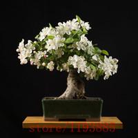 ingrosso bonsai di gelsomino-200 pz Semi di Gardenia (Cape Jasmine), semi di fiori bonsai, odore di belle piante in vaso di fiori per il giardino di casa