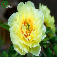 şakayık çiçek tohumları toptan satış-Çok renkli isteğe bağlı Şakayık SeedsPromotion Balkon Bonsai Çiçek Tohumları Çiçekli Bitkiler 20 adet H028