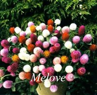 Wholesale flower seed mixes for sale - Group buy 400 Mixed Color Gomphrena Flower Seeds Easy to grow
