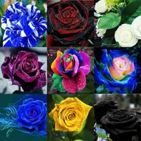 Wholesale Paper Rose Flowers - Wholesale New Varieties 10 Colors Rose Pink Tea Rose Flower Seeds color 100 seeds per package flower seeds home
