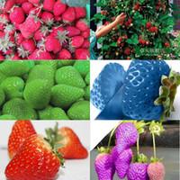 ingrosso generi i semi-2016 8 tipi di semi di fragola, 1 tipo 200 pezzi, totale 1600 pezzi, verde viola rosa bianco nero rosso blu arrampicata fragola semi HY1159