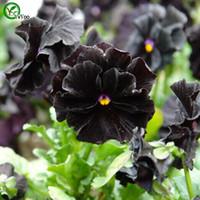 blumensamen stiefmütterchen großhandel-Stiefmütterchen samen Blumensamen Bonsai Pflanze für Hausgarten 50 Partikel / lot g015