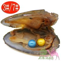 Wholesale Mixed Flat Pearls - Triangular oyster pearl mixed 28 color 6-7 mm AAAA round Akoya twins pearl oysters, packed in vacuum, harvest your own pearls