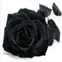 Common black seed - New China Rare Black Rose Flower Seeds