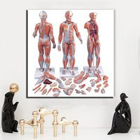 Wholesale Art Body Figure - ZZ1487 modern canvas art Body structure canvas pictures oil art painting for livingroom bedroom decoration unframed wall decor