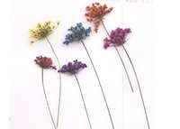 Wholesale Dried Stems - Lace Flower With Stem Natural Dried Flower For Flower Painting Material Wedding Party 120Pcs