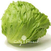 Wholesale Vegetables Ball - Lettuce Ball Vegetable Seeds 500 Pcs   Lot Easily home-grown Hardy Vegetables for Salad