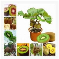 Organic sprout seeds organic - 100seeds bag kiwi fruit tree seeds sprouting new year high