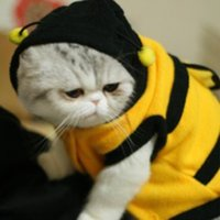 Wholesale Dog Dressed Bumble Bee - Hoomall Fashion Cute Yellow Bumble Bee Little Wings Dog Pet Hoodies Pet Apparel Halloween Costume Clothes Bumblebee Dress Up