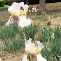 ingrosso fiore bianco iride-Bellissimi semi White Iris Flower Pot Planters Garden Bonsai Flower Seed 30 Particles / lot a017