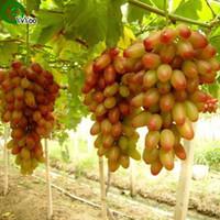 ingrosso uva seme-Semi d'uva Senior Cortile Piante Delicious Fruit Seeds 50 Particles / lot R014